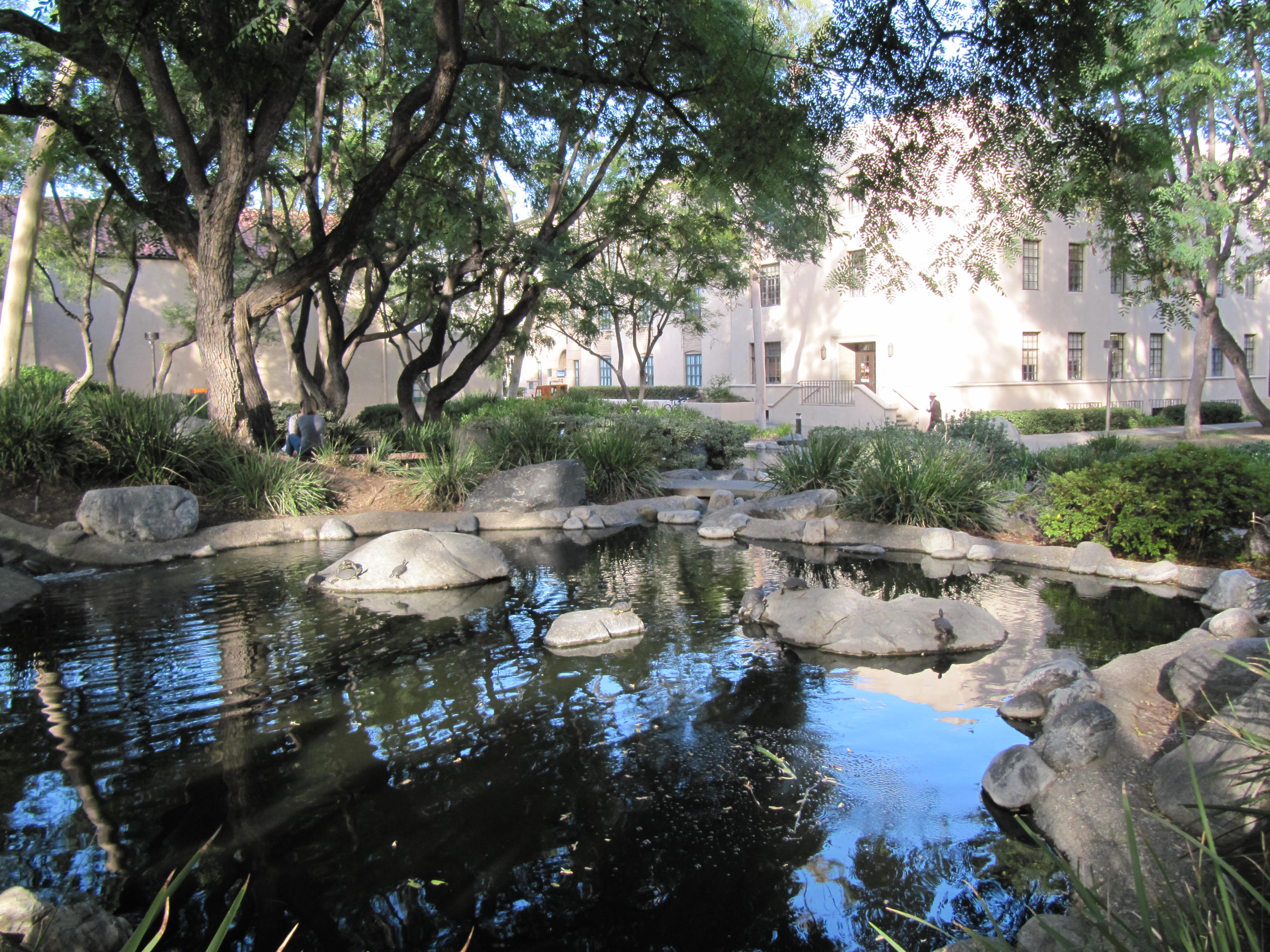 Cal Tech Turtle Pond